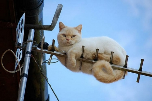 chat-antenne